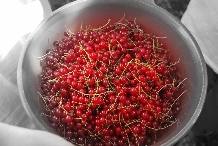 Красная смородина
