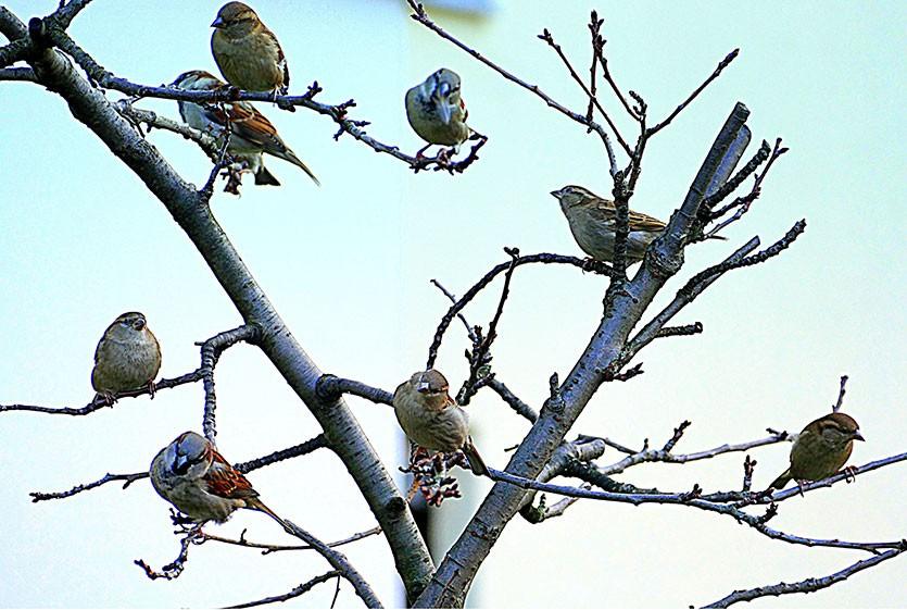 Привлечение птиц на участок