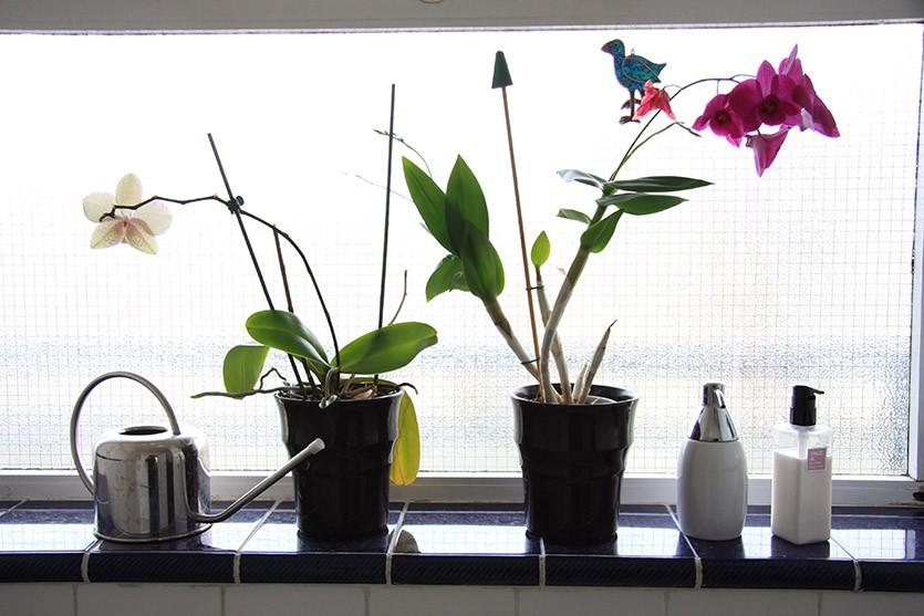Орхидеи в ванной