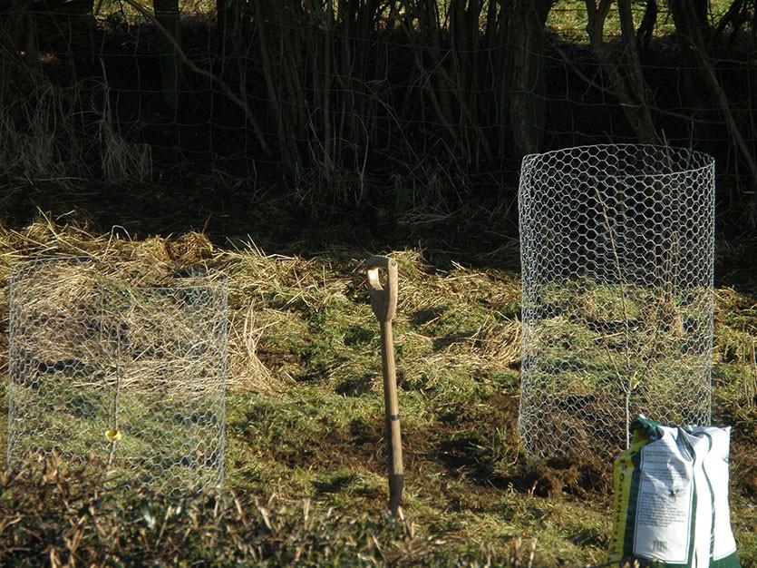 Защита коры от зайцев