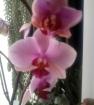 Мои орхидеи))