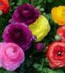 Цветы и растения 1