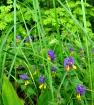 Полевые лесные цветочки