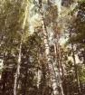 соседний лес
