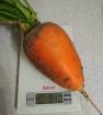 Морковь неизвестного сорта