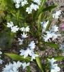Апрельские цветы