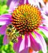 Обитатели : пчёлки, бабочки , паучки и т.д.