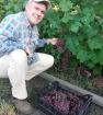 Ранний виноград розовый
