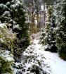 Тропинка к лесу