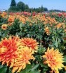 How to hand pollinate and grow food anywhere
