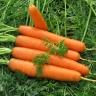 Морковь Долянка