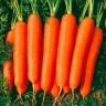 Морковь Наталья