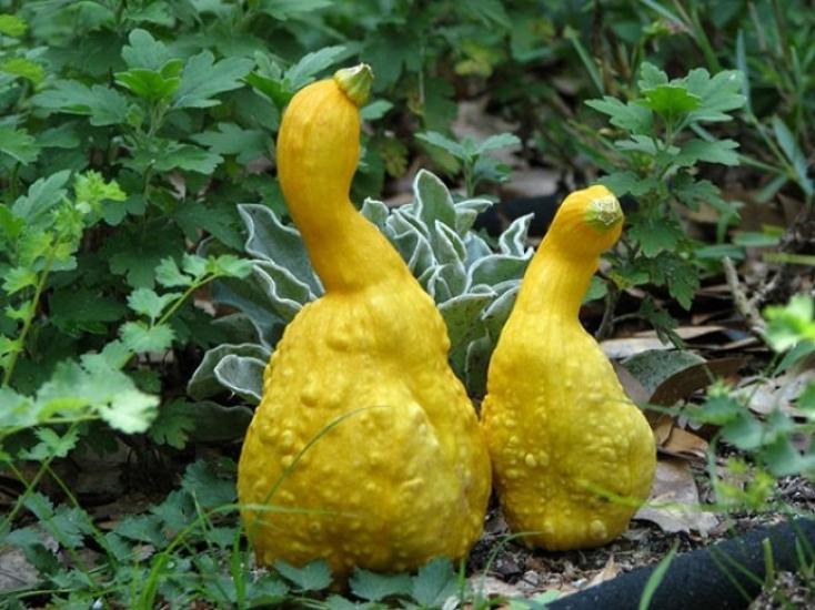 необычные фрукты и овощи фото сущности, подселённые астрального