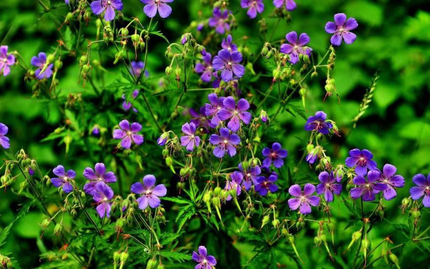 Фотографии полевых и лесных цветов последний
