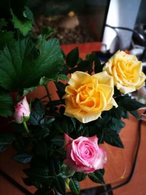 Розы мини