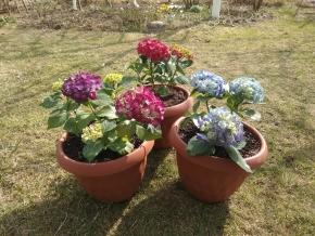 Новые растения для моего сада 2019