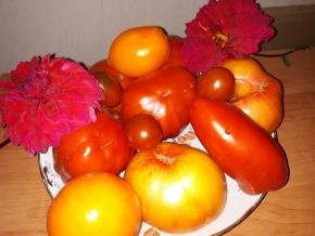 Мои томаты 2019
