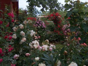 Мой сад.