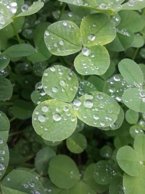 Клевер макро дождик работа антона