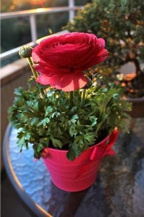 Мой любимый садик-цветник