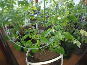 Постройки для раннего урожая