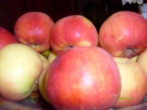 Яблоки из своего сада !!!