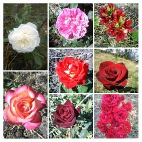 Были в саду цветочки