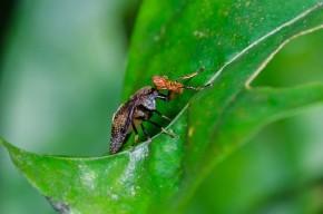 Beautiful bugs that help your garden grow