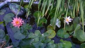 Мой маленький пруд