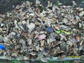 Посев однолетников под зиму.