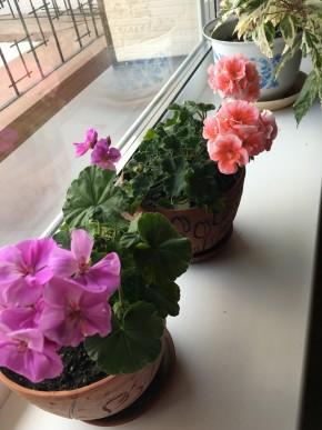 Радости зимнего сада