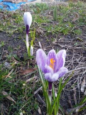 Так хочется весны