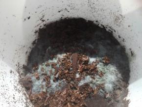 Триходерма на кофе